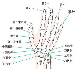 手指の骨画像