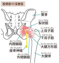 梨状筋の説明