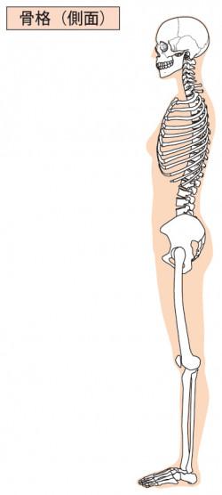 横から見た人体」図