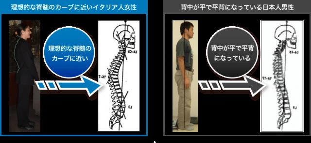 姿勢の対比